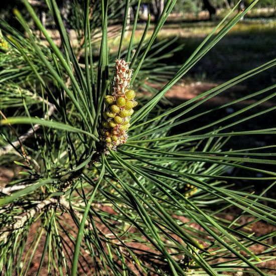 Pine Hello World Cheese! Relaxing That's Me Check This Out Enjoying Life Hi! Hanging Out Hanging Out Adventure Club Summer Views The Journey Is The Destination First Eyeem Photo Taking Photos Holidayseason Check This Out Cool_capture_ Fine Art Photography Enjoying Life That's Me Hello World Relaxing Cheese! Taking Photos Hi!