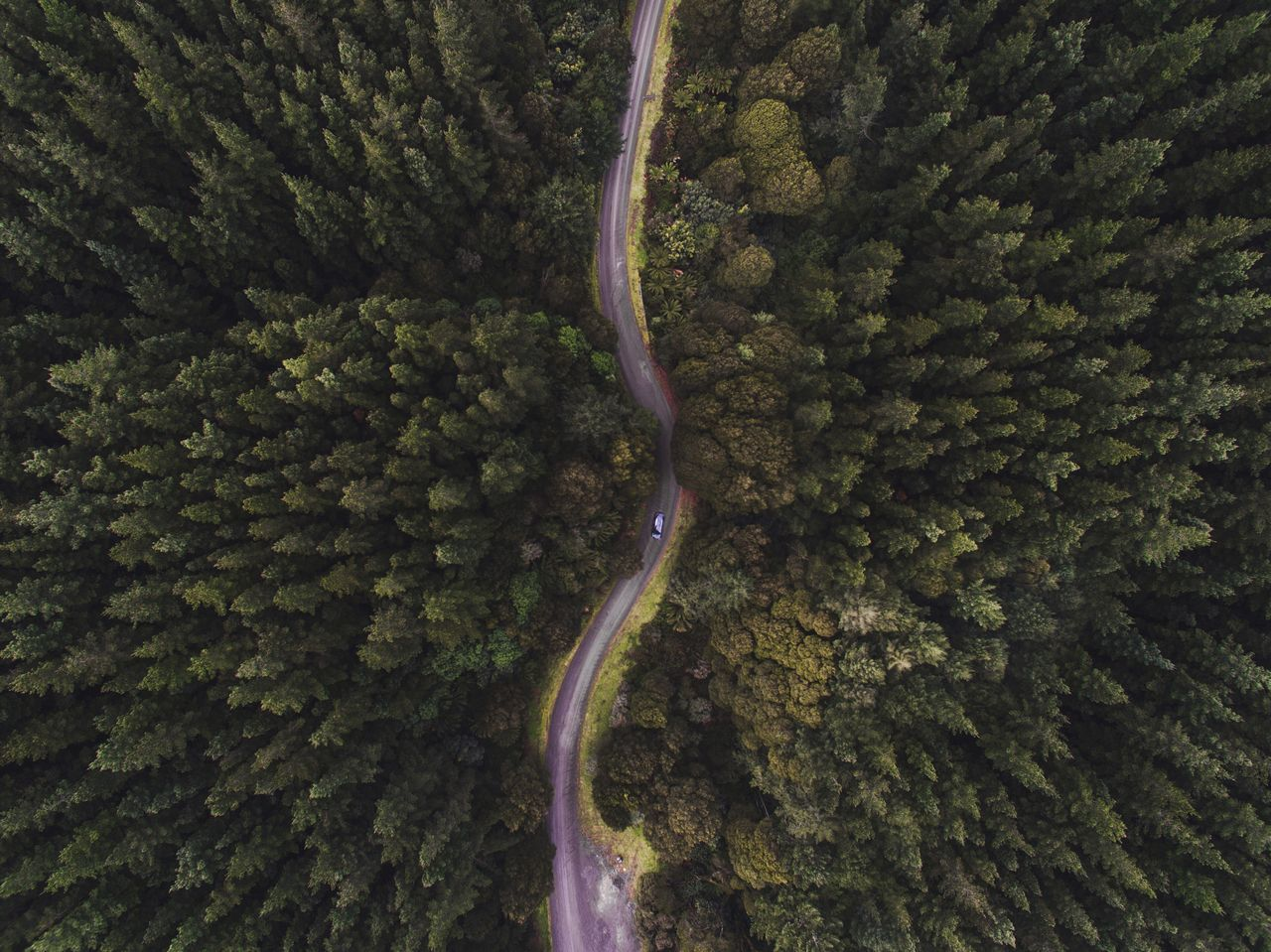 Pivotal Ideas Drone dronephotography colour palette view from above pine trees forest Green outdoors wilderness adventure road trip A Bird's Eye View