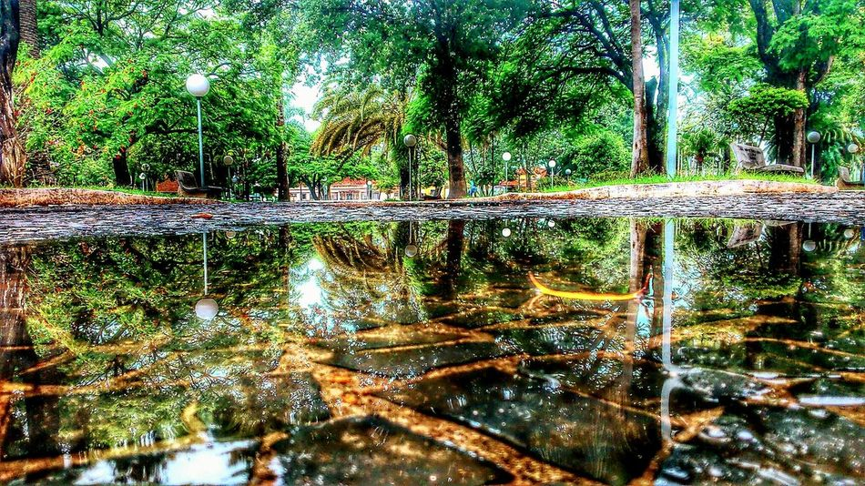 Praça  Agudos-sp Trees Water Ground Water Reflections Reflection Check This Out Reflections Perspective