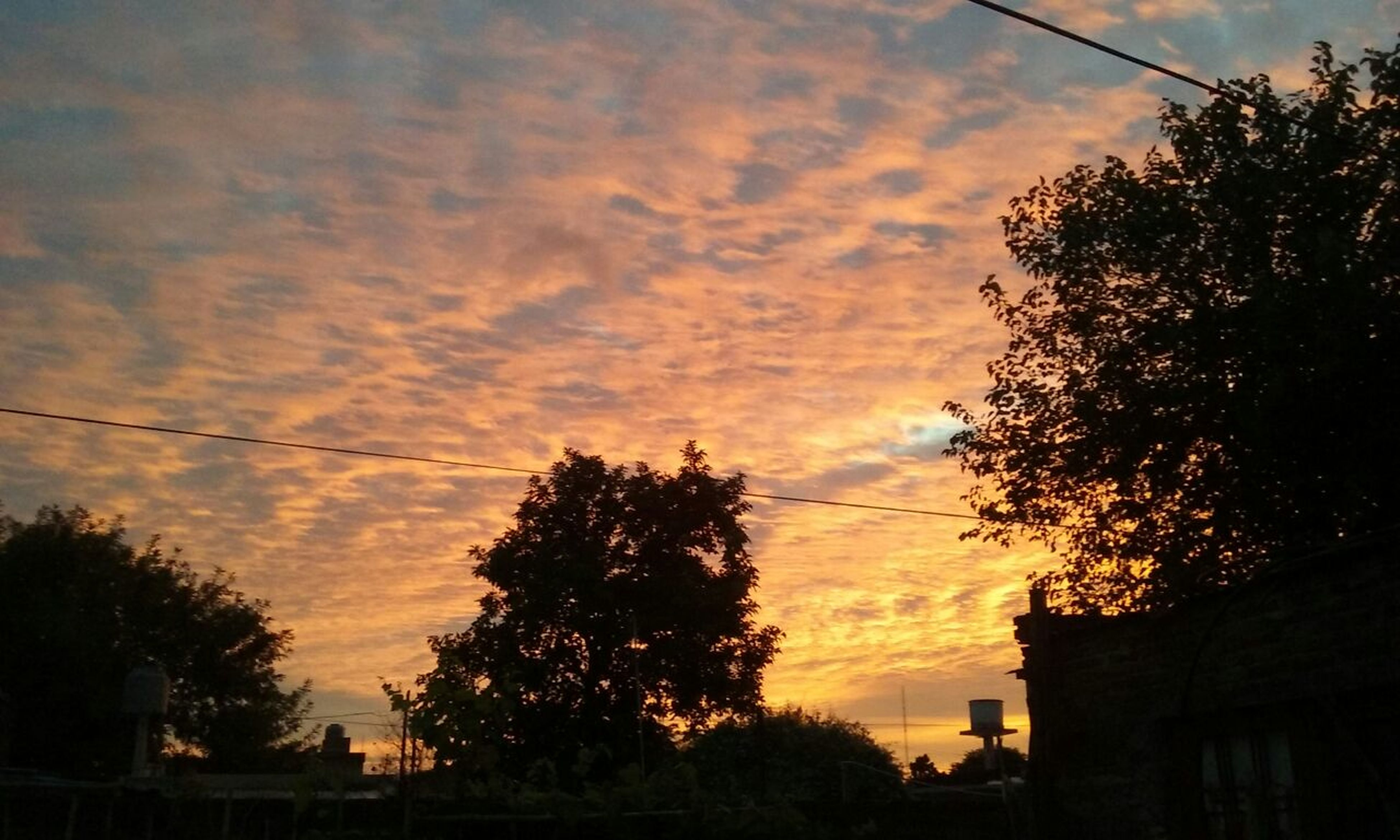 tree, sunset, sky, cloud - sky, nature, orange color, beauty in nature, growth, no people, silhouette, outdoors, scenics, day