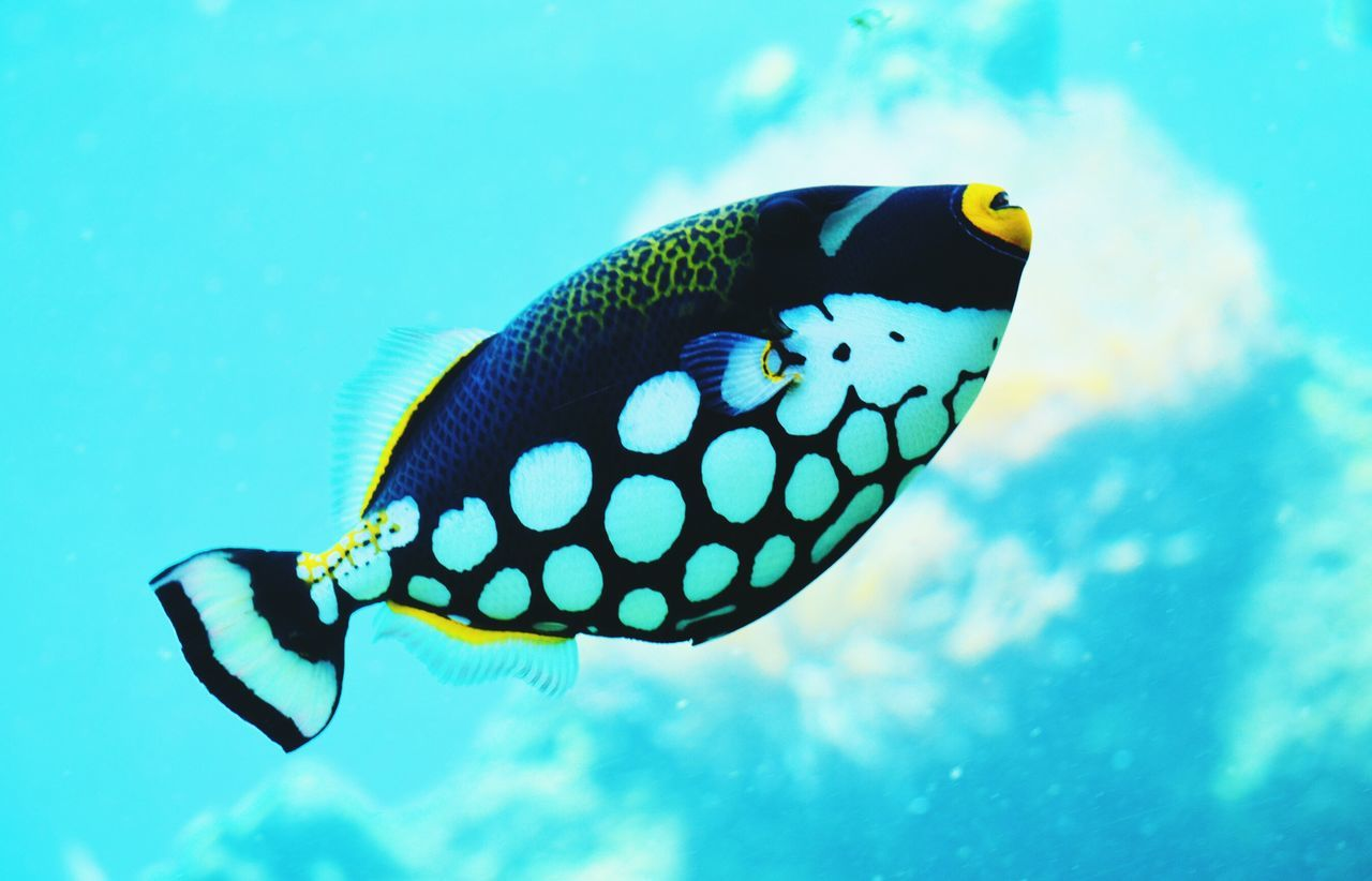 Beautiful stock photos of fish, Animal Themes, Beauty In Nature, Blue, Close-Up