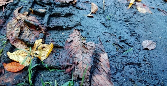 Traces Of Time Human Vs Nature Autumn Leaves in the Mud Deceptively Simple Fall Beauty Seasonchange Exploring New Ground Muddywalk SurvivalOfThefittest