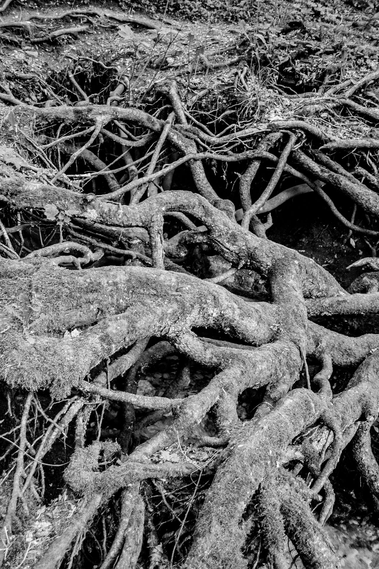 Beach Black And White Photography Close-up Day Field Grass Nature No People Outdoors Roots Roots Of Tree