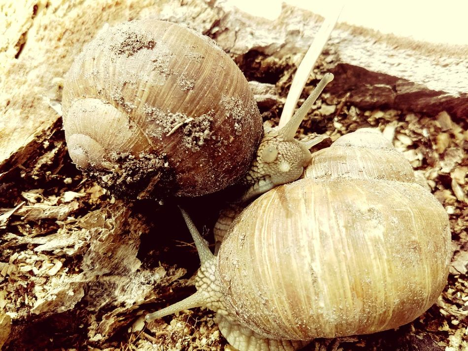 No People Close-up Day Outdoors Nature Healthy Eating Food Freshness Spring Beauty In Nature Wood - Material Tree Trunk Animals In The Wild Snails In Shells EyeEmNewHere Snails Dirt Animal Themes in Lithuania