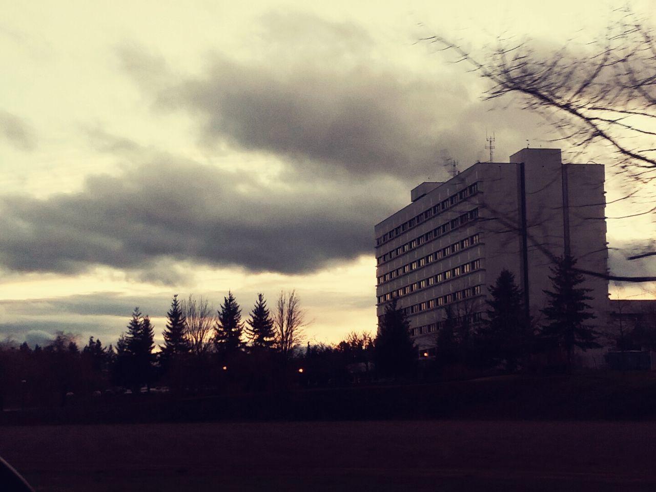 Onadrive Trees Ahospital