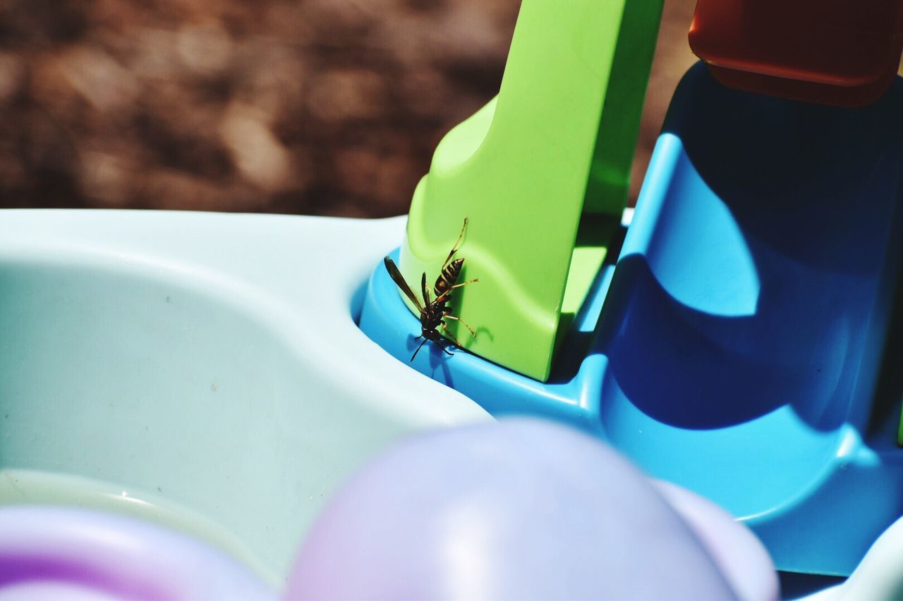 close-up, day, multi colored, no people, blue, outdoors