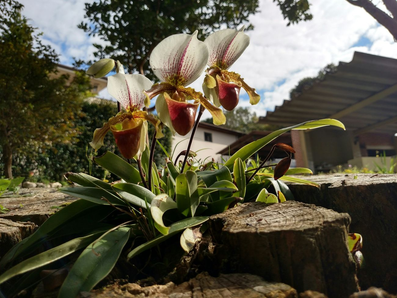 Orquídea Flowers,Plants & Garden In My Garden Orquideas❤ Flowers Plants Plants 🌱 Nature_collection Beautiful Nature Plants And Flowers