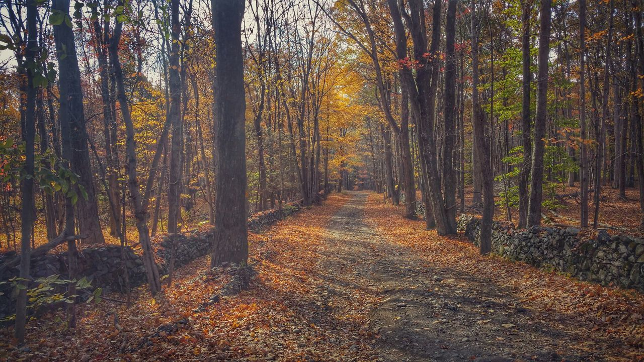 The road less traveled Light And Shadow Autumn EyeEm Nature Lover Autumn Colors Soltitude EyeEm Best Shots Forest Dirt Road Trees Stone Wall Favorite Places Nature Earth Peace And Quiet Alone