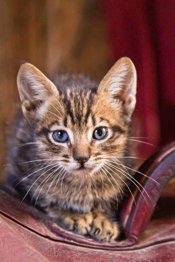 Good night! Boa noite! Cats Animals Eyem Cute Cats