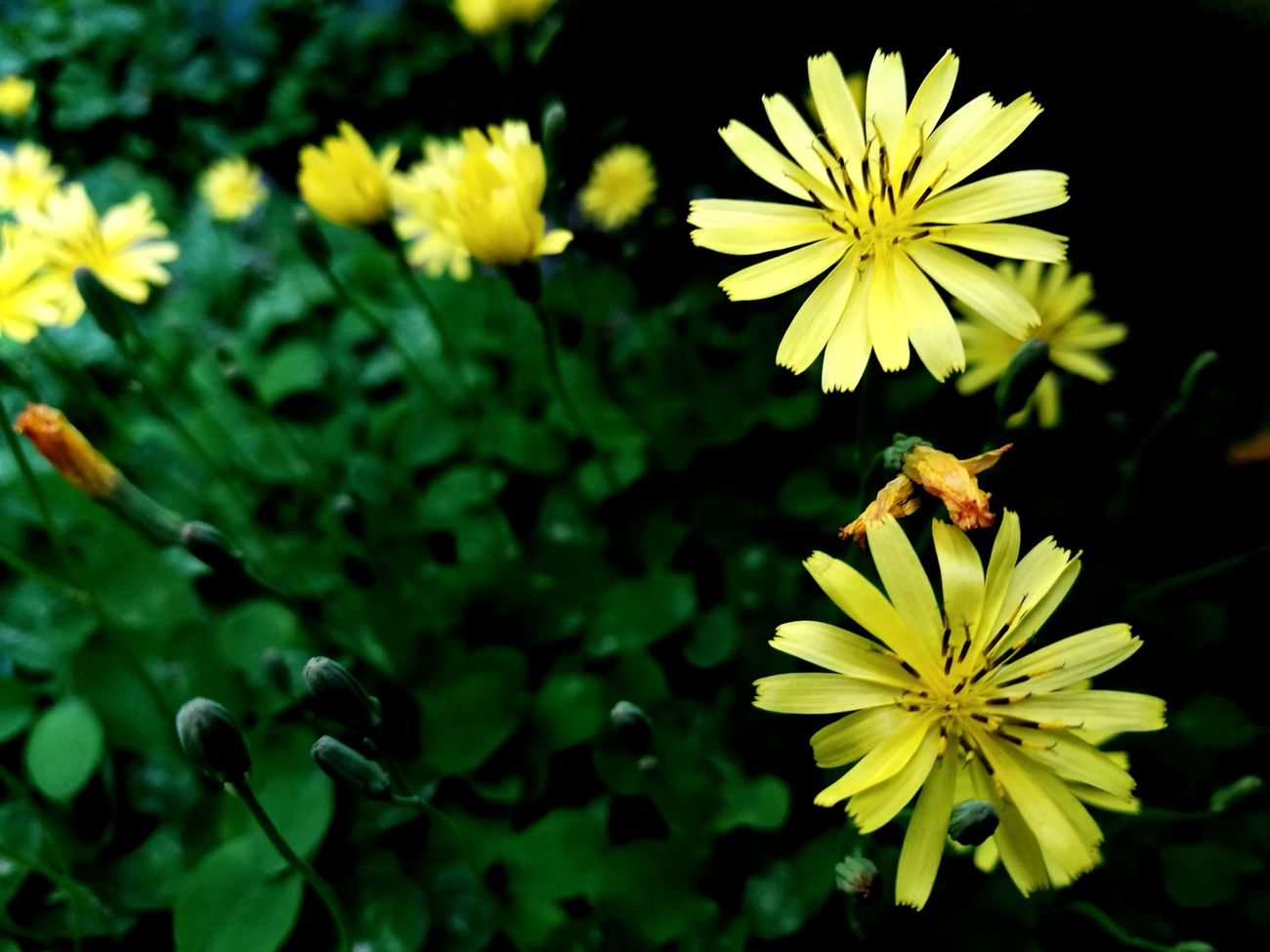 Flower Yellow Plant Nature Green Color Beauty In Nature Leaf Flower Head Botany Fragility Day Outdoors Summer Plant Part Growth Freshness Multi Colored Outdoor Pursuit Petal Alternative Medicine
