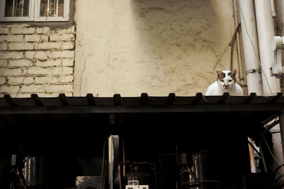 Bisection Animal Animal Themes Bisection Cat Domestic Cat HongKong No People Outdoor Stray Cat