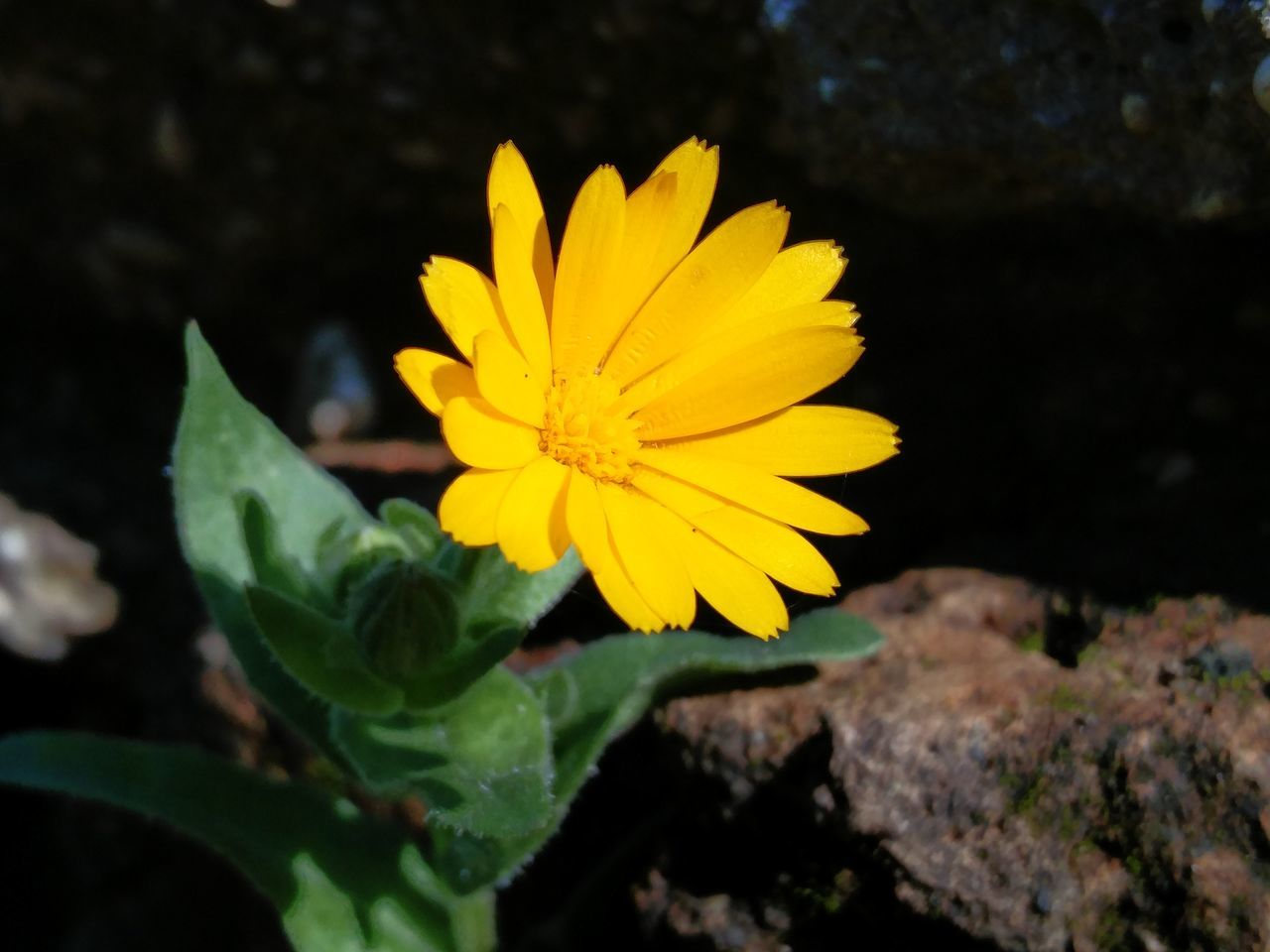 Yellow Flower Flower Head Nature Petal Plant Leaf Beauty In Nature Wildflower Outdoors