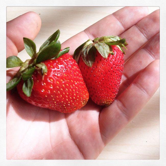 Hello World Enjoying Life summer strawberry