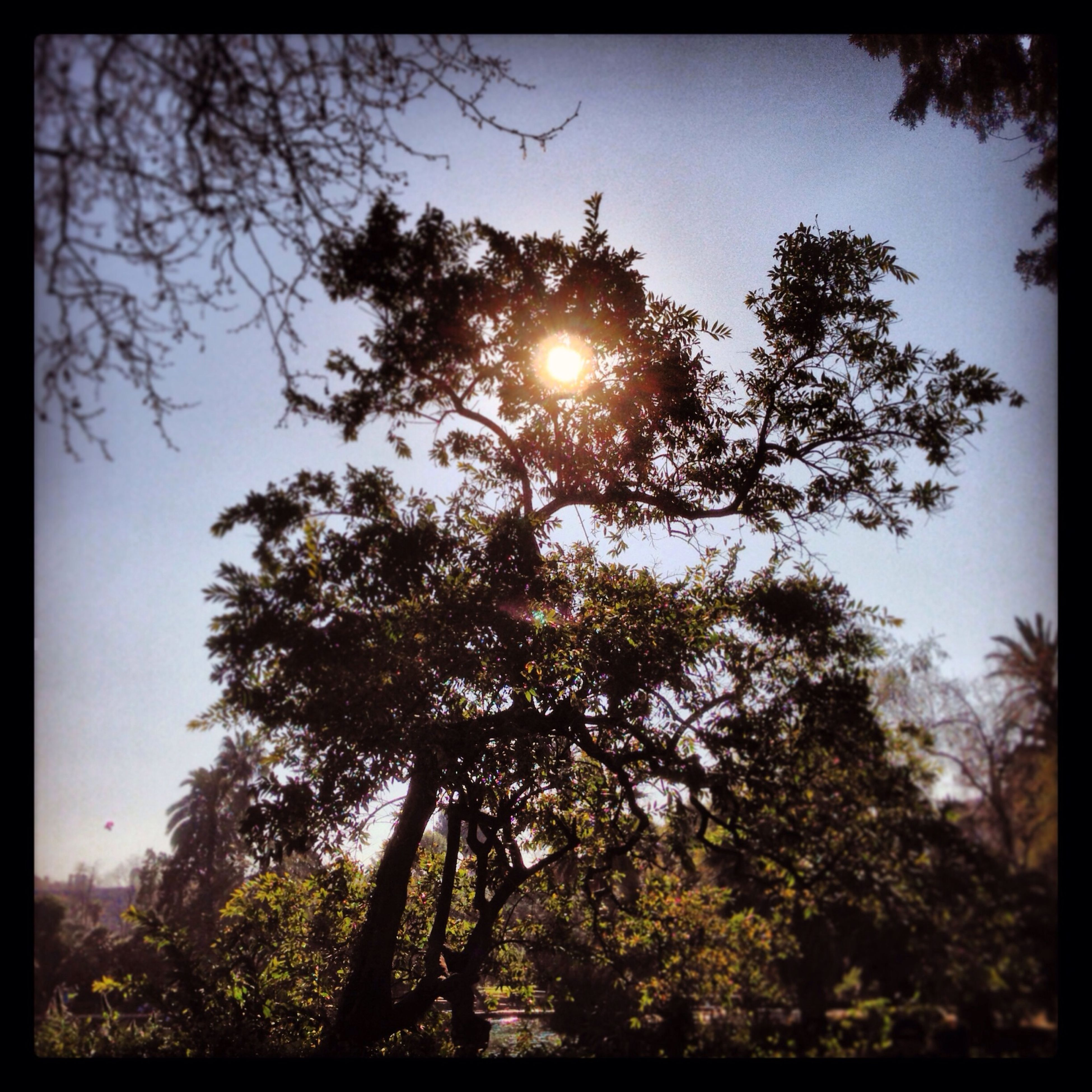 tree, sun, transfer print, growth, tranquility, sunlight, branch, beauty in nature, nature, sunbeam, low angle view, auto post production filter, lens flare, tranquil scene, scenics, sky, clear sky, silhouette, sunset, outdoors