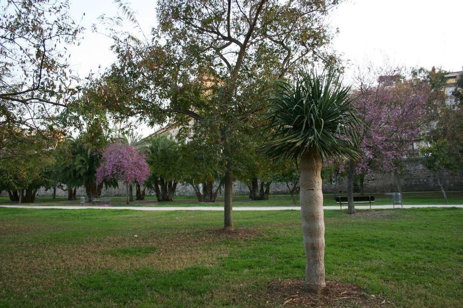 03/2016 Exotic Palms Go Green Green Green Color Palm Palm Paradise Palm Tree Palm Tree Leaves Palm Trees Palms Urban Paradise Urban Park