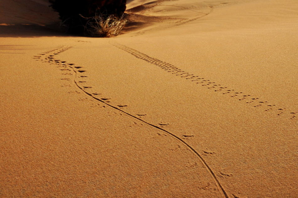Beautiful stock photos of sand, Calm, Day, Desert, Landscape