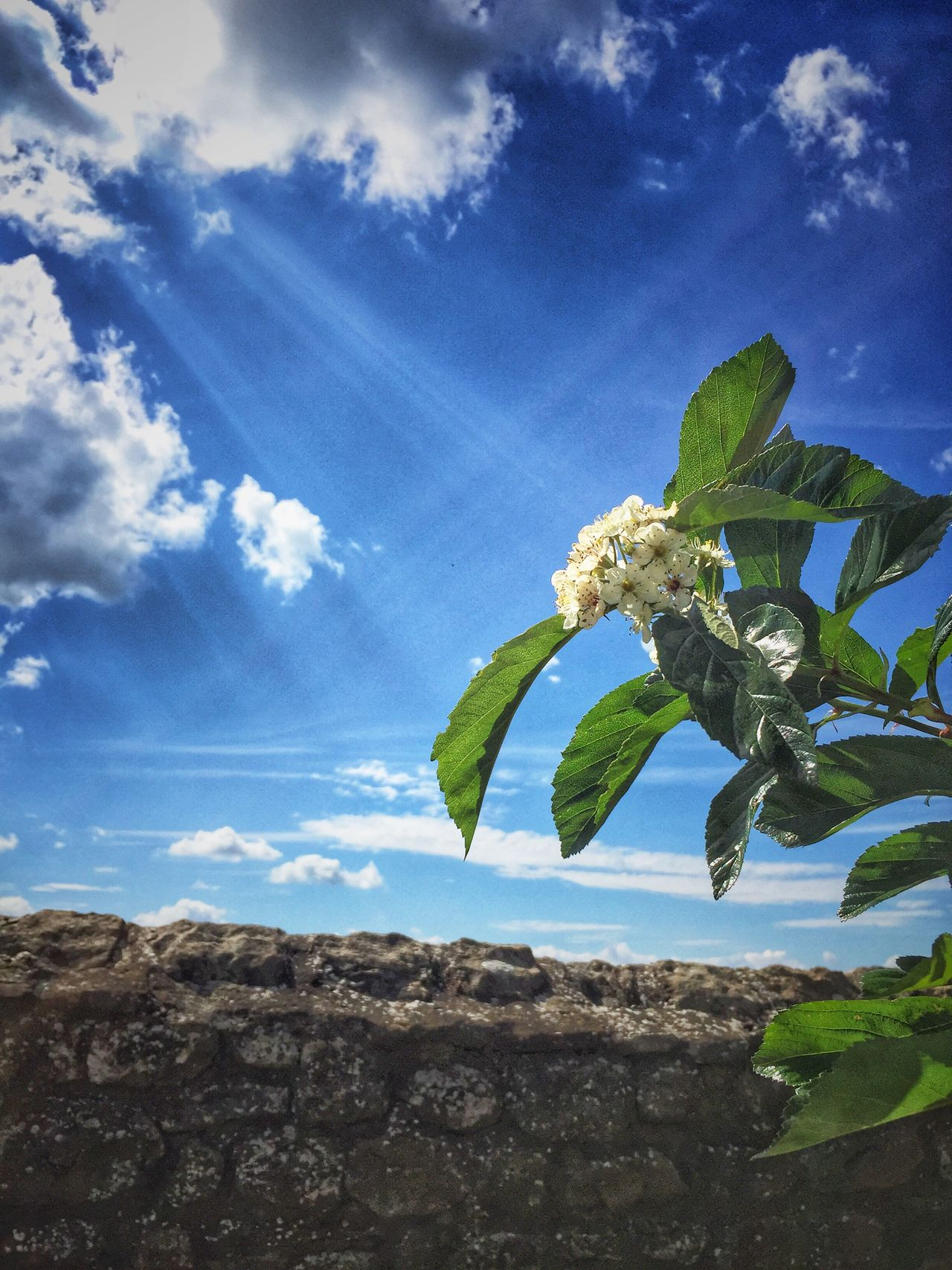 Sky Leaf Growth Nature Low Angle View Cloud - Sky Beauty In Nature Plant Day Blue Flower No People Outdoors Fragility Tree Banana Tree Freshness Close-up Flower Head