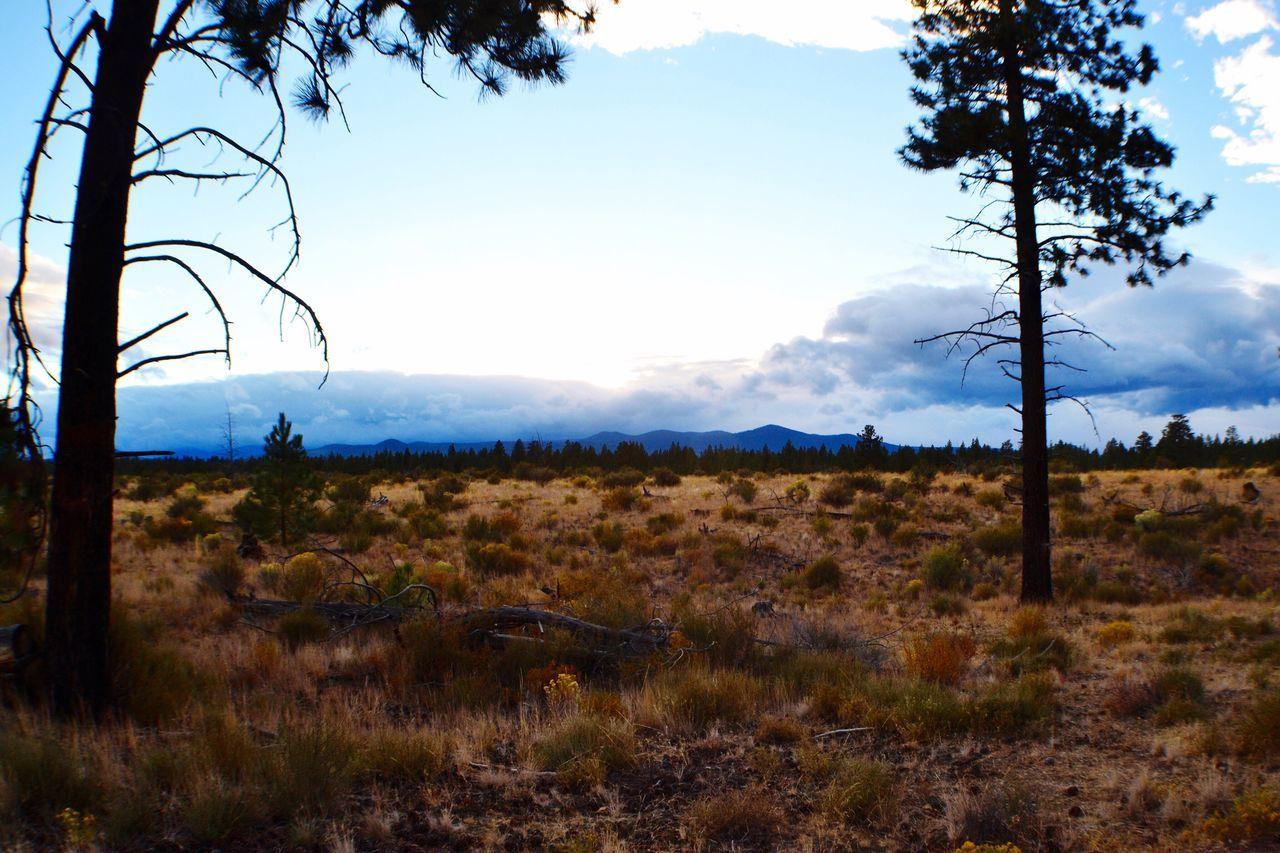 Nature Photography bend Oregon high desert Tranquility HighDesert Scenics Sagebrush Sunset Oregonexplored PNW Bendoregon Lizzie.Elise.Phillips