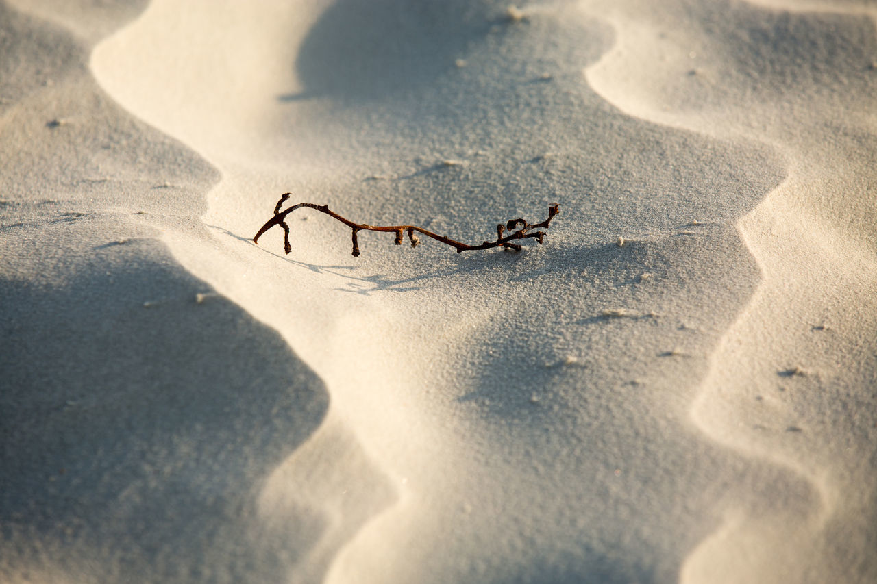 Beautiful stock photos of desert, Arid Climate, Backgrounds, Beauty In Nature, Close-Up