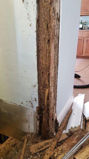 Termite damage Damaged And Wrecked Damage Termites Broken Calamity Renovation Carpentry