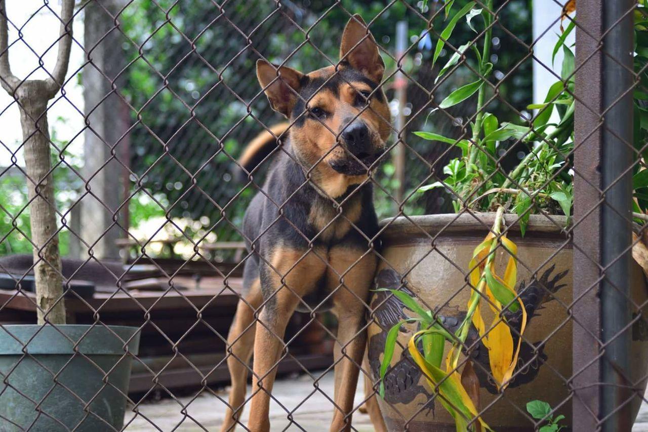 Nikkor Af 35-70 F3.3 Nikond600 Dogslife Doginhouse Security Dog HongKong