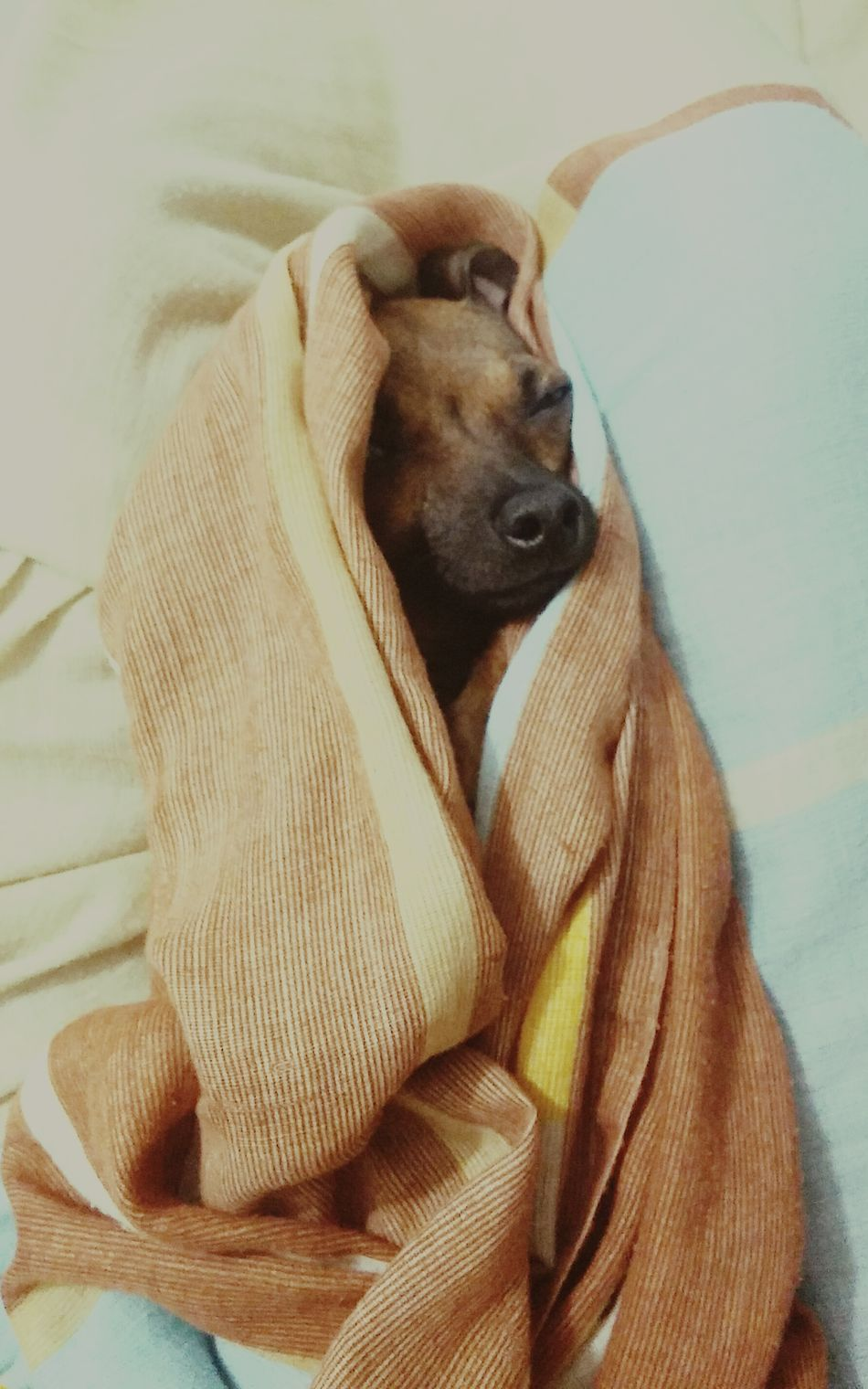 She is Inward, my Love, my Dog. Say Cheese!