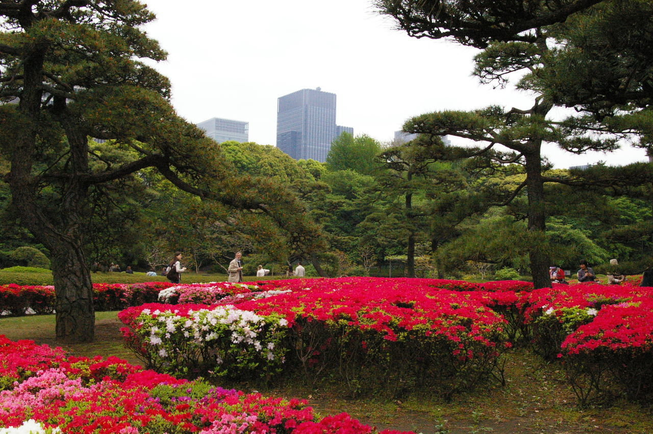 tree, city, growth, flower, architecture, skyscraper, building exterior, park - man made space, built structure, outdoors, plant, day, nature, cityscape, no people, sky