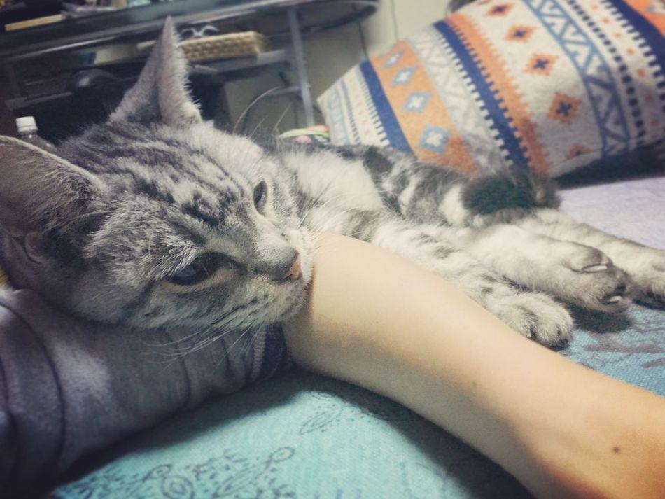 Hi babe. Cat Lovely Like A Dog Mimi