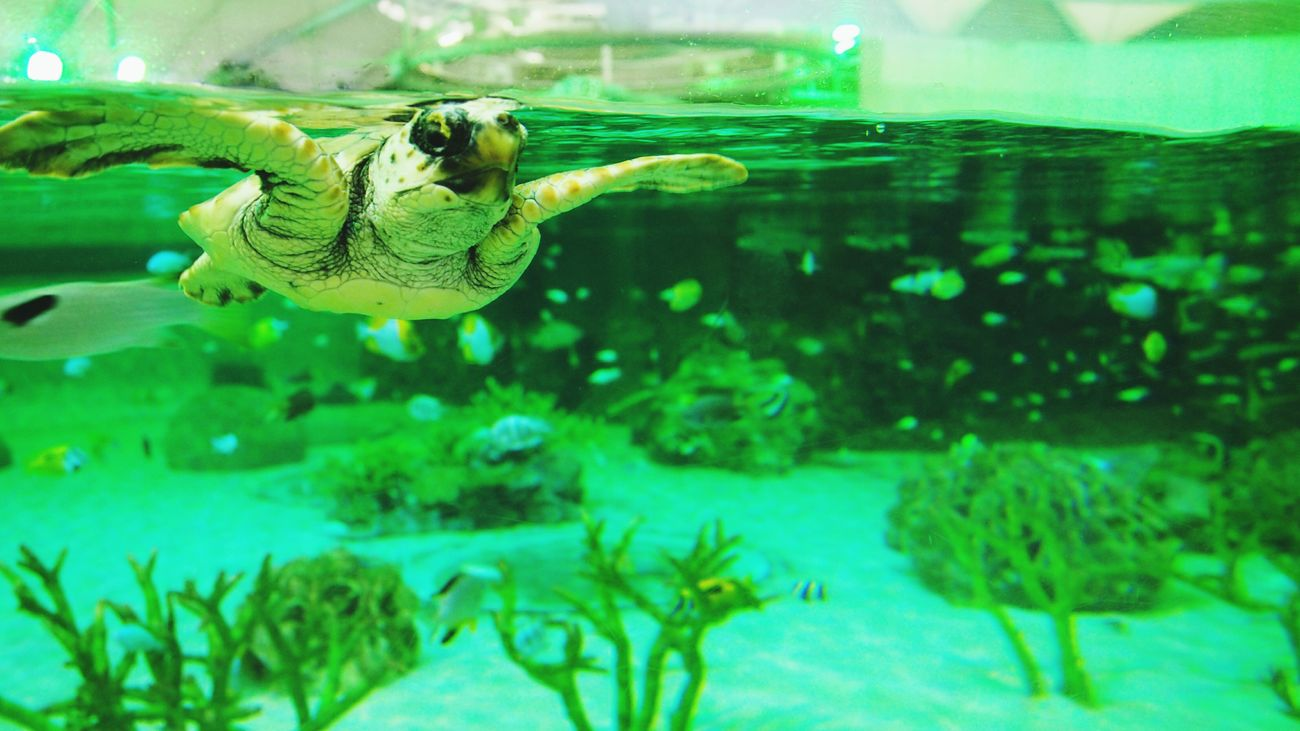 Underwater Aquarium Kamogawa Sea World No People Turtle