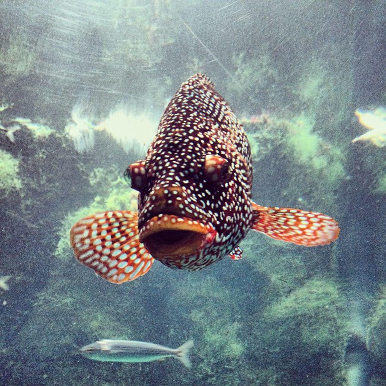 Aquarium Acoruña Thebigescape