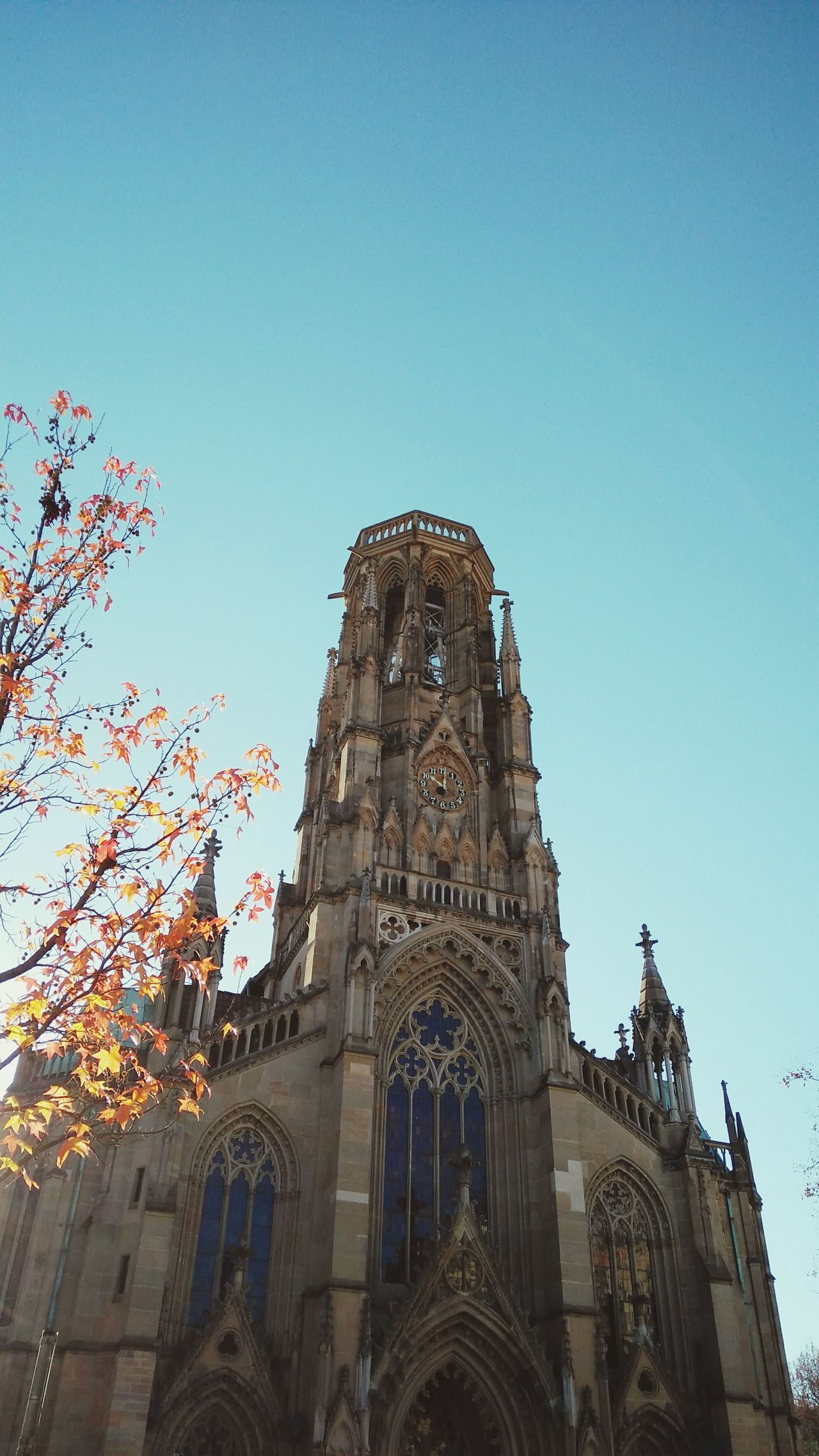Unknown Church in Fall. · Stuttgart Germany Churches Religion Spirituality Architecture City Life Culture Low Angle View Up Trees Branches Leaves Blue Sky