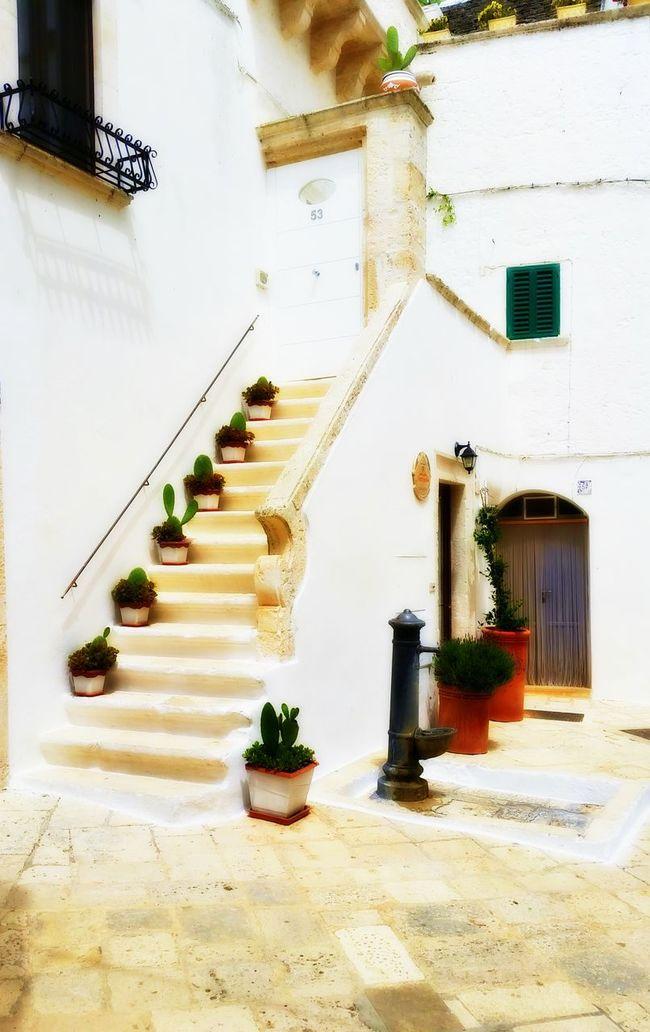 Architecture Built Structure Cactus Locorotondo Mediterranean  No People Puglia Shocase: July Showcase July White