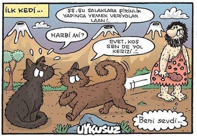 Ilk kedi Komik Karikatur Karikatur Mizah Eğlence Eglenceli Komedi Penguen Girgir Uykusuz Caps Istanbul Fun Funny Love Instagood Me TBT  Follow Cute Followme Happy Photooftheday Beautiful Girl like4like picoftheday photoremphin