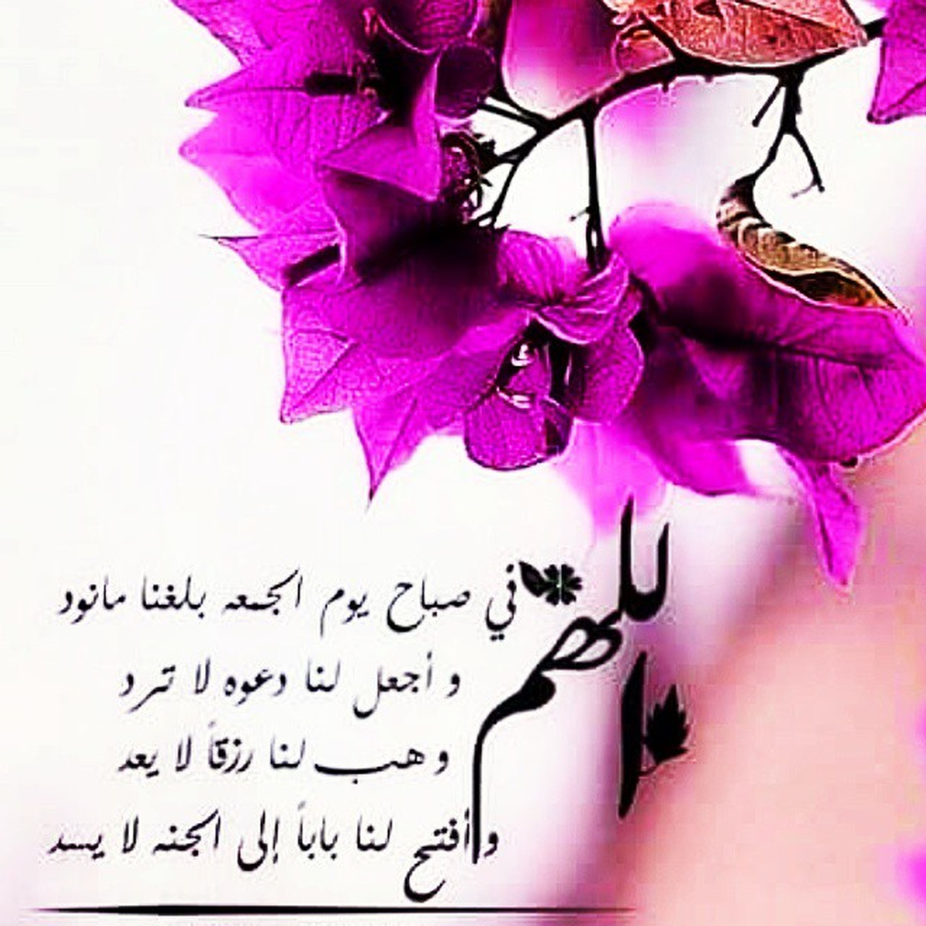 flower, petal, purple, close-up, pink color, indoors, fragility, multi colored, creativity, art and craft, freshness, text, paper, art, western script, studio shot, flower head, white background, decoration, beauty in nature