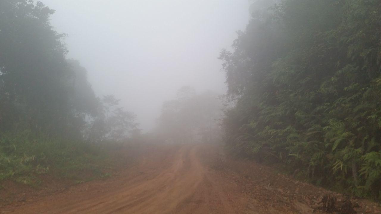 View Of Trees On Landscape Against Sky During Foggy Weather