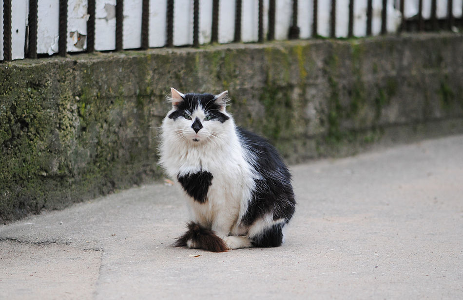 cat living on the streets Animal Themes Black And White Blackandwhite Cat Cats City Cat EyeEmNewHere Homeless Mammal No People Outdoors Pets Portrait Street Cat Street Cats Street Life Uniqueness Adapted To The City