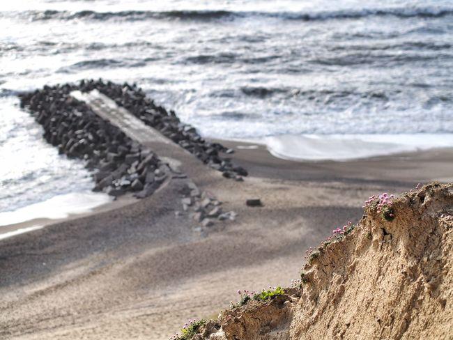 Bovbjerg Water Waves Wave Breaker Beach Rocks Flowers Landscape M.Zuiko 45mm 1:1,8 Jylland  Olympus OM-D E-M5