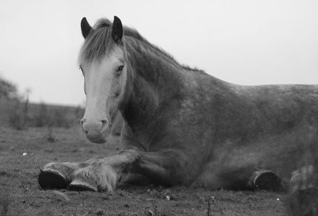 Old Nag Horse Black And White Relaxing Nature Check This Out Taking Photos Hanging Out Hanging Out Lancashire Beautiful Horse This Morning