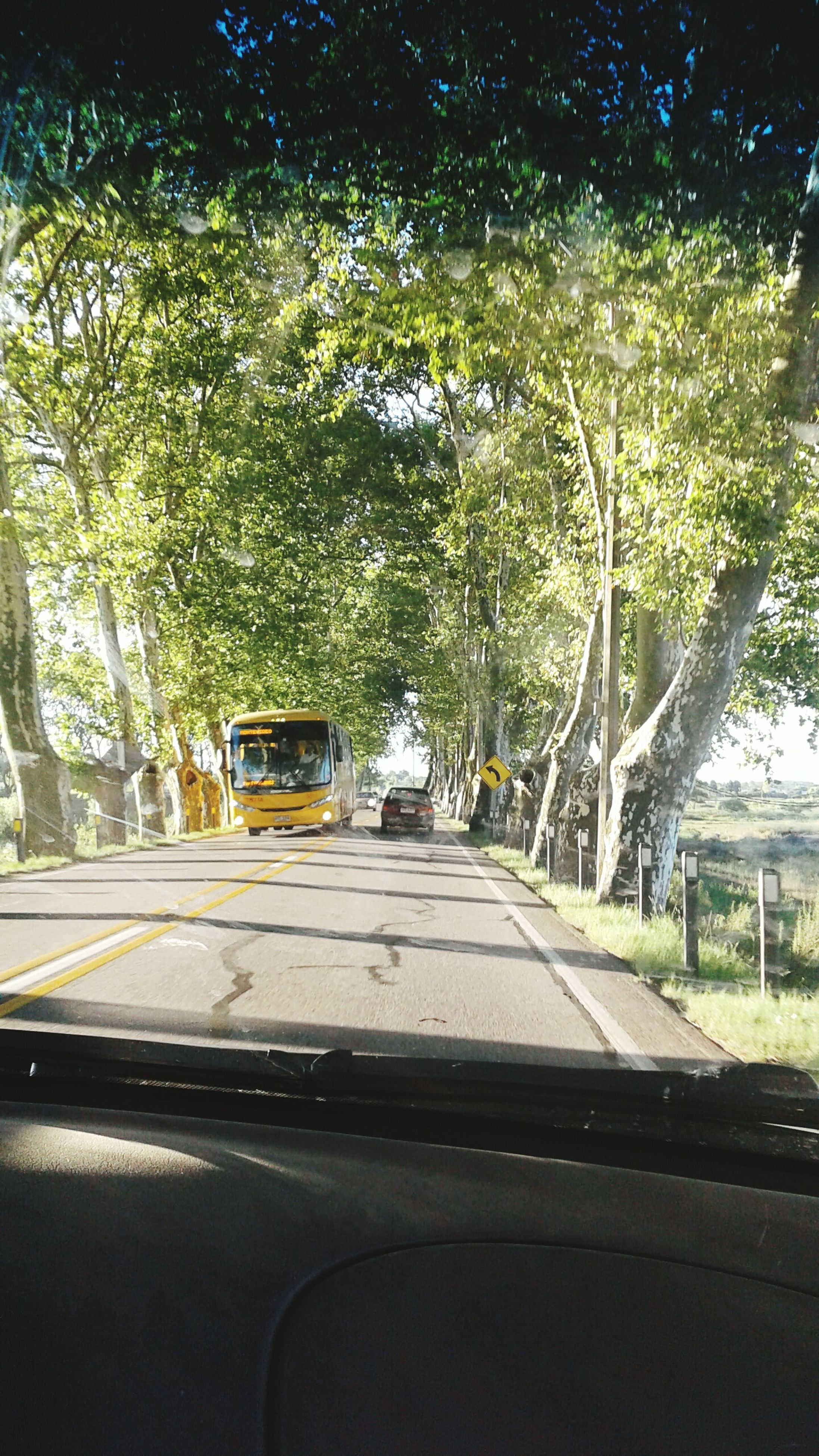transportation, car, tree, windshield, land vehicle, car interior, vehicle interior, mode of transport, travel, no people, road, car point of view, the way forward, day, windscreen, dashboard, growth, outdoors, nature