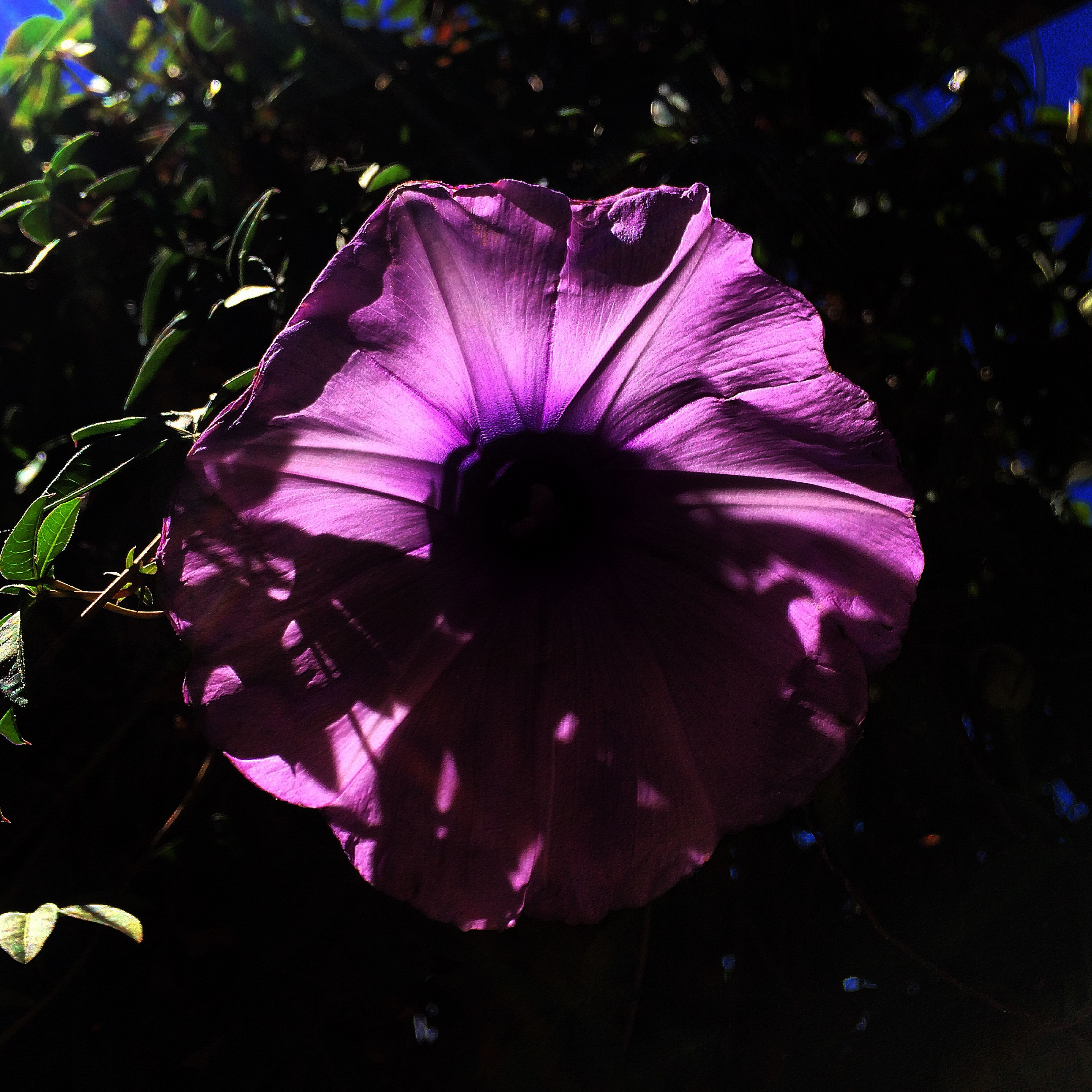 flower, animal themes, purple, one animal, beauty in nature, fragility, close-up, animals in the wild, nature, wildlife, petal, flower head, outdoors, single flower, no people, growth, water, freshness, focus on foreground, sunlight