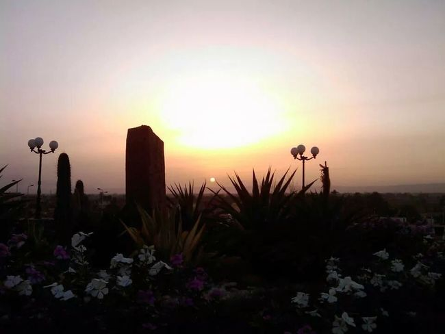 Sunset Sunny Flowers,Plants & Garden Flowers .. taken by me :) ... I ♥ this pict a lot