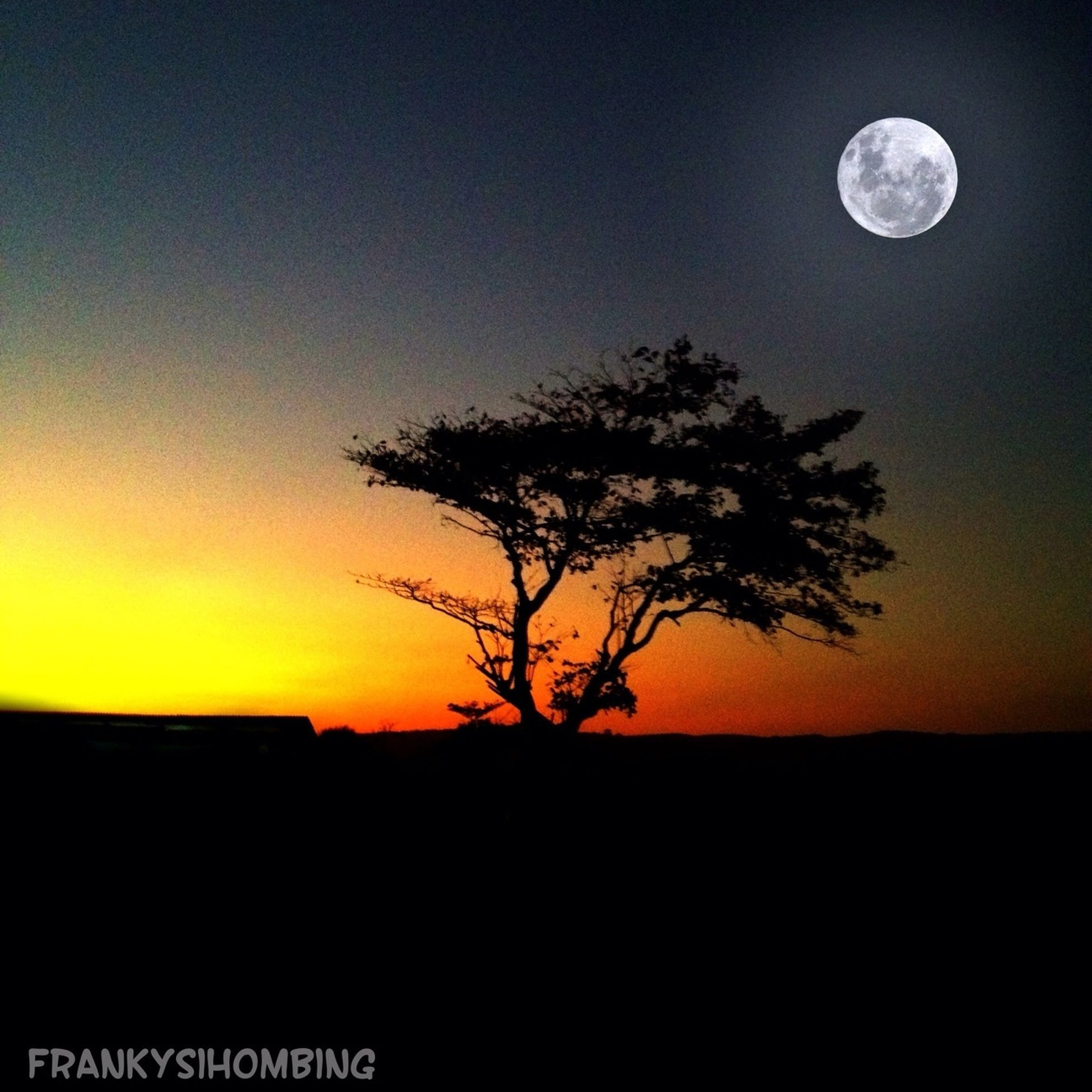 silhouette, sunset, tranquil scene, scenics, tranquility, beauty in nature, moon, bare tree, sky, tree, landscape, copy space, nature, idyllic, dark, dusk, clear sky, field, majestic, full moon