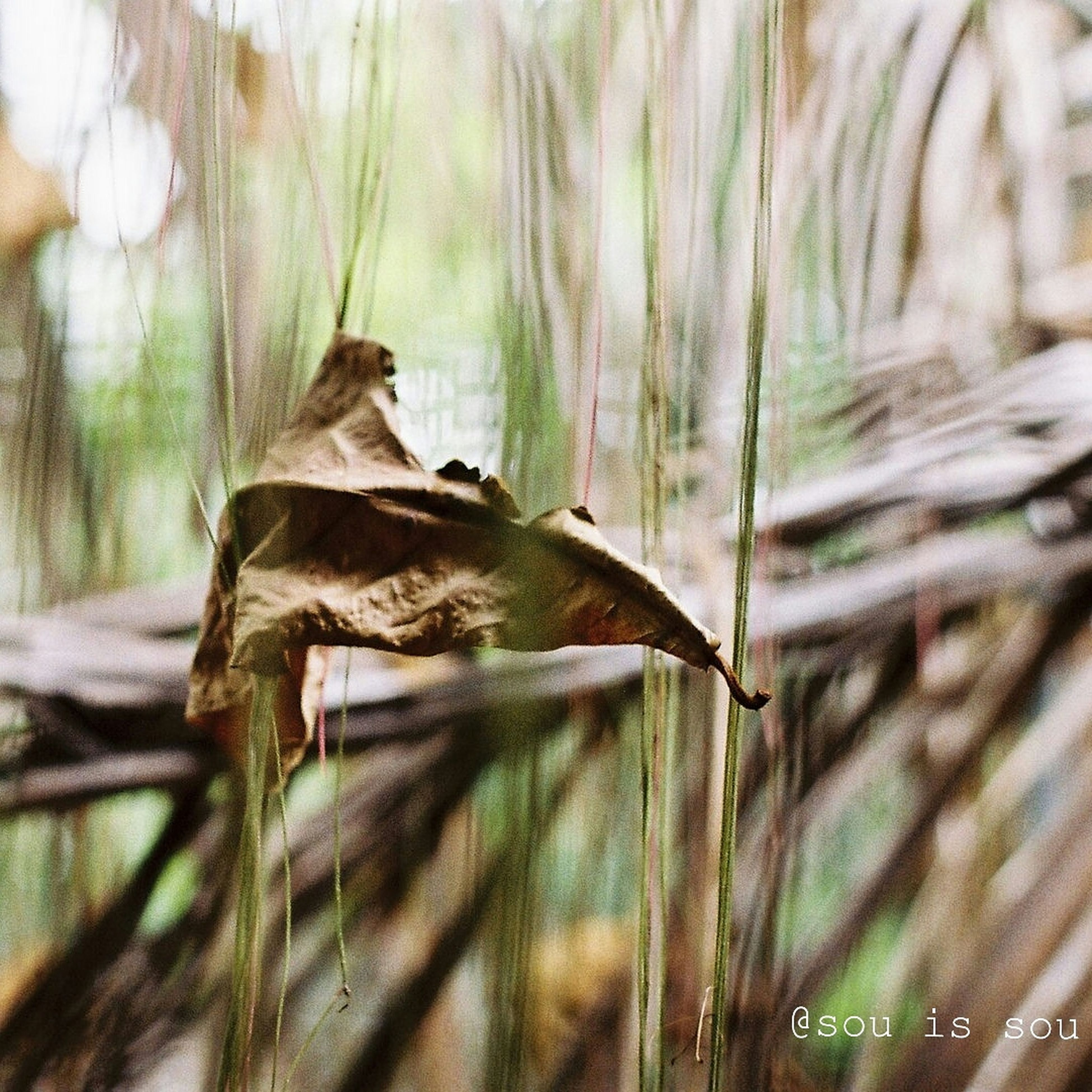 focus on foreground, wood - material, selective focus, close-up, nature, dry, day, tree, branch, outdoors, tree trunk, twig, wood, animals in the wild, no people, animal themes, wildlife, plant, forest, leaf