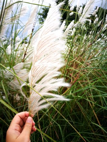 Nature Close-up Grass Day Holding One Person Outdoors Flower Relaxing Nature_collection Grass Photography Beauty In Nature Grass