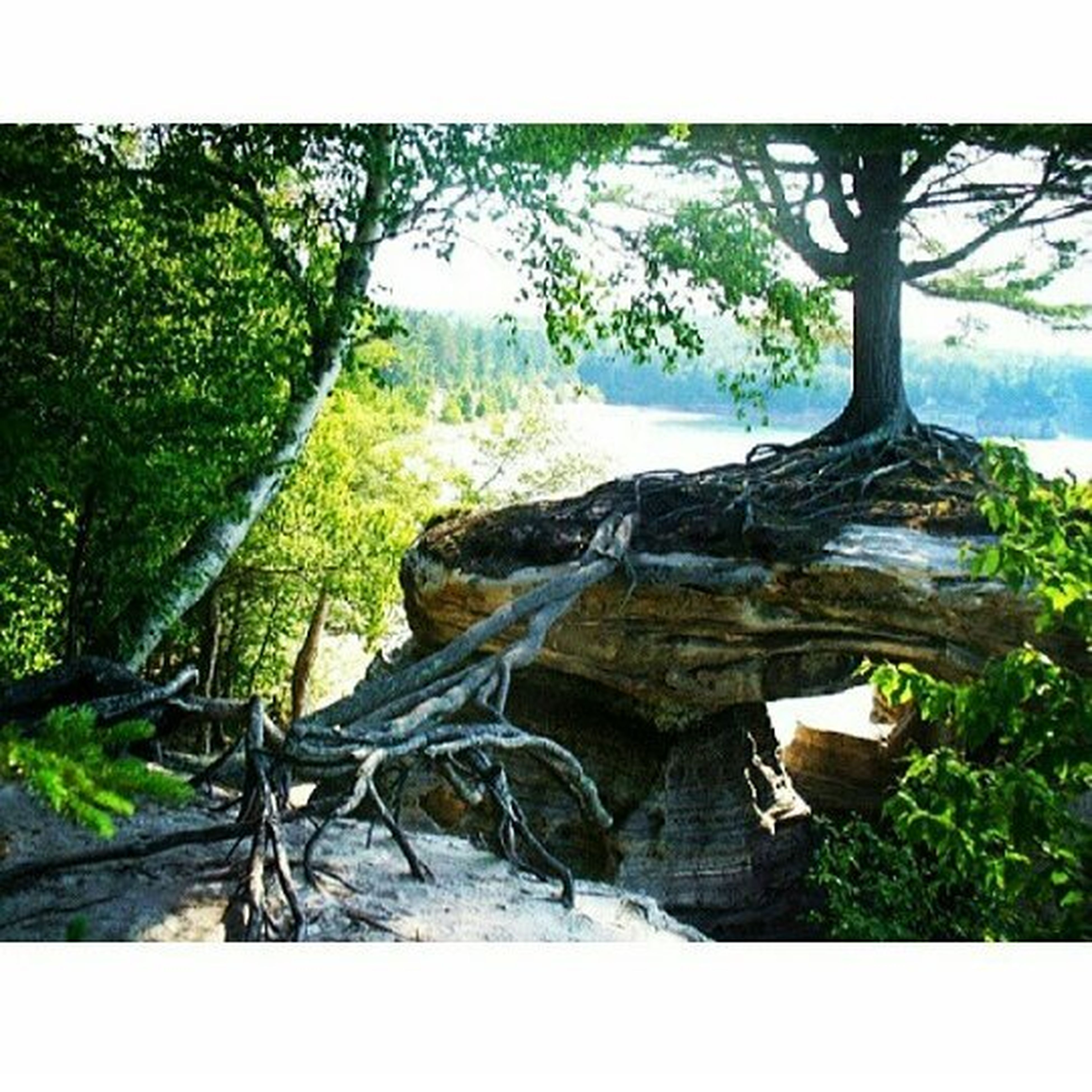 tree, tranquility, tranquil scene, nature, scenics, sky, beauty in nature, rock - object, forest, non-urban scene, day, landscape, tree trunk, growth, outdoors, non urban scene, no people, idyllic, mountain, rock formation, remote, rock, travel destinations, green color, tourism