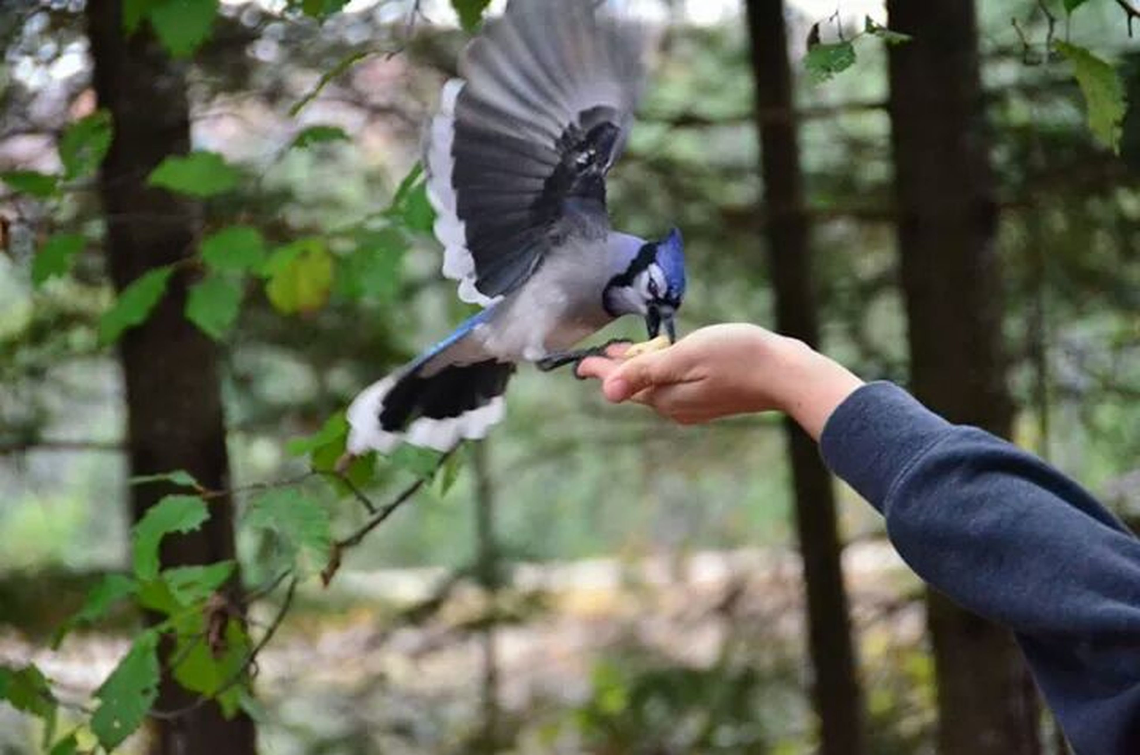animal themes, bird, one animal, animals in the wild, wildlife, focus on foreground, perching, tree, full length, spread wings, holding, person, day, side view, outdoors, nature, flying, two animals
