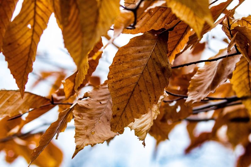 Tamron 70-200mm F/2.8 EyeEm Nature Lover Trees Leaves Macro Photography Photography Beautiful Park Nature Photography