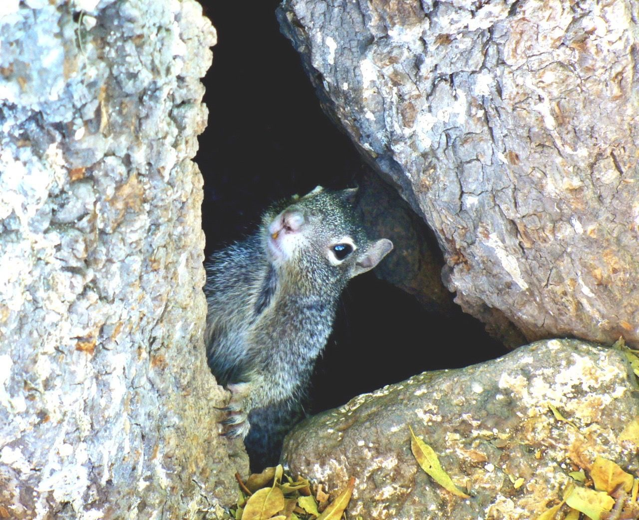 Close-Up Portrait Of Squirrel Amidst Rocks