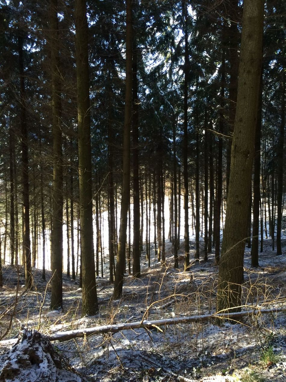 Odenwald  Have A Walk Woods Snow
