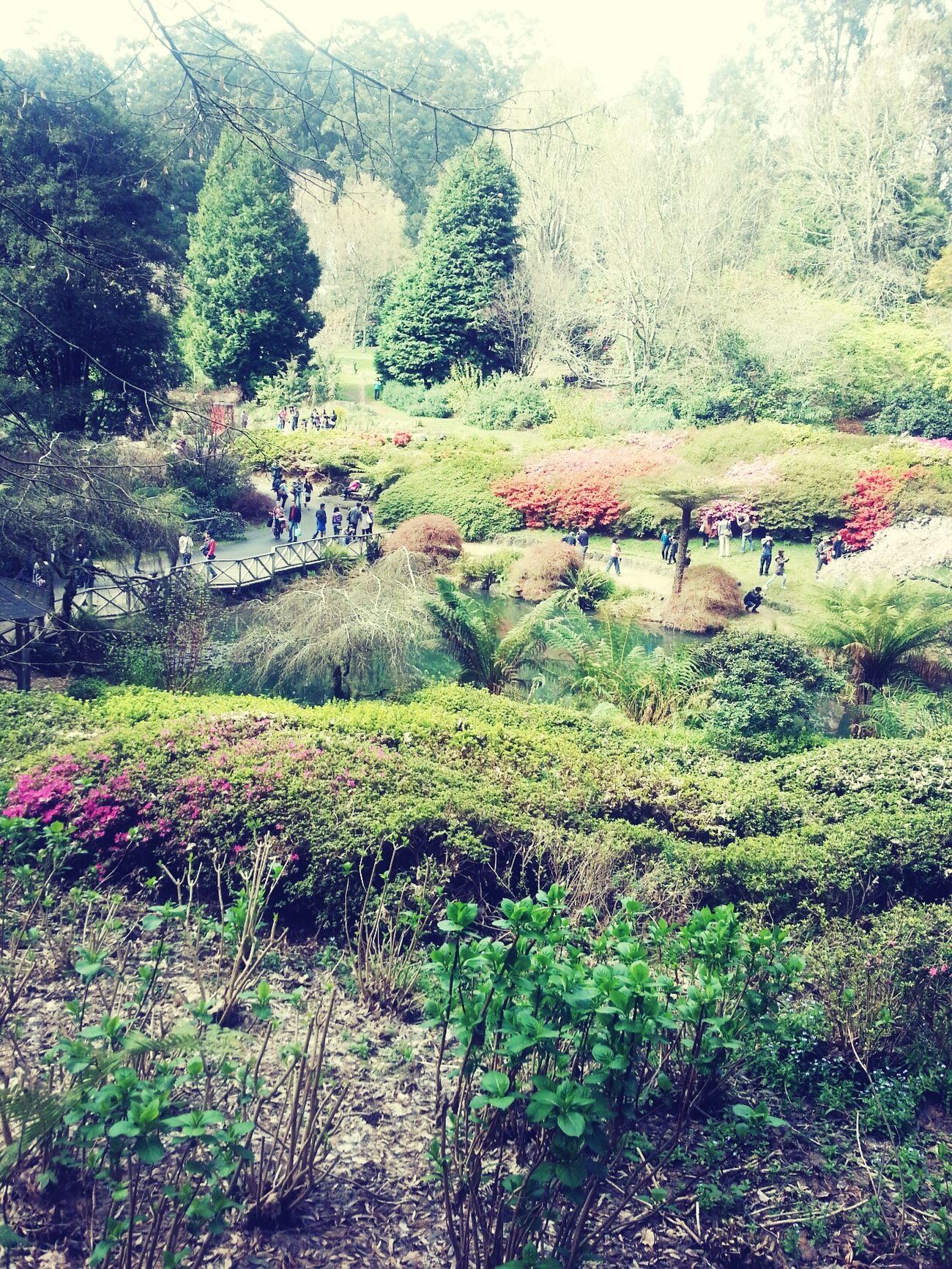 Garden Rhododendron Nationalparks